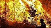Strażacy: większość pożarów lasów wynikiem podpalenia