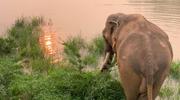 Streamują codzienne życie słoni, aby ukoić nerwy w czasach zarazy