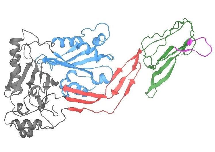 Struktura pneumolizyny / University of Liverpool  /Materiały prasowe