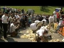 Strzyżenie owiec na olimpijskich arenach?