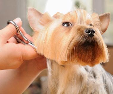 Strzyżenie psa: Jak samodzielnie ostrzyc psa w domu?
