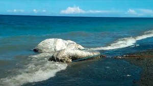 Stwór morski wyrzucony na brzeg Filipin