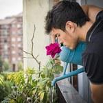 Stwórz piękny ogród na balkonie