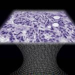 Stworzono bezsoczewkowy mikroskop do wykrywania nowotworów