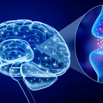 Stworzono sztuczną synapsę