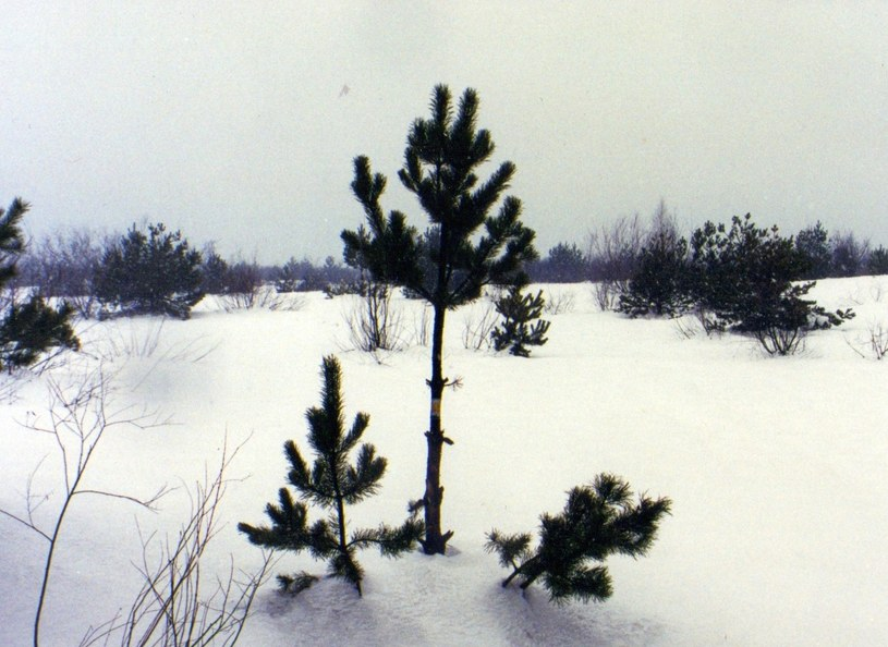 Styczeń 2002 r. Żółty szlak przez pustynię pod śniegiem /Odkrywca