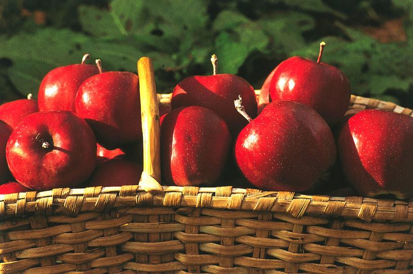 Styria śmiało może konkurować z Polską o miano jabłkowego potentata. Tutejsze uprawy zawdzięczają swoją jakość żyznym glebom i klimatowi /fot. Wiesenhofer/© Österreich Werbung /&nbsp