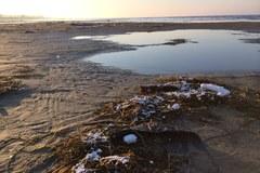 Styropian na plaży. Wygląda jak śnieg
