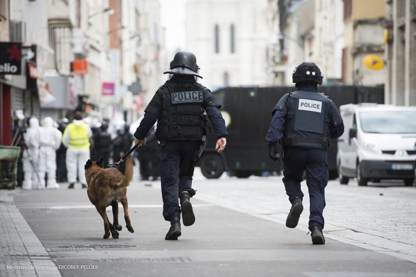 Suka Diesel, która pomagała funkcjonariuszom w środowej obławie w Saint-Denis na przedmieściach francuskiej stolicy, zginęła w następstwie strzelaniny / zdj. ilustracyjne /PAP/EPA