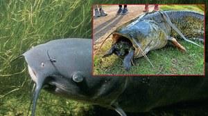 Sum miał w paszczy żółwia. Zwierzęta nie przeżyły