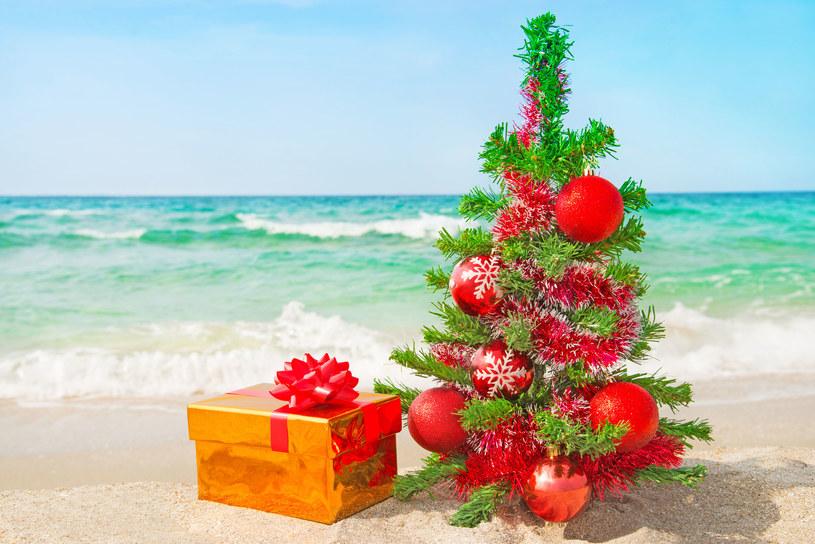 Surfujący Mikołaj, choinka wbita w piasek i kangury na kartkach świątecznych, zamiast reniferów to widok warty podróży na drugi koniec świata /123RF/PICSEL