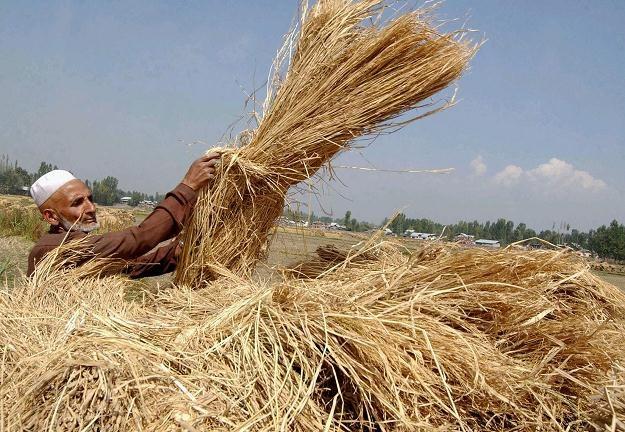 Surowce w 2012 r. nie dadzą wiele zarobić? /AFP