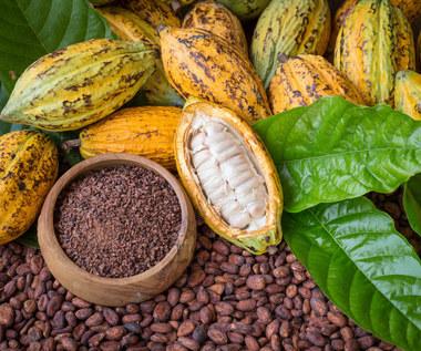 Surowe kakao:  Zawartość i fantastyczne właściwości