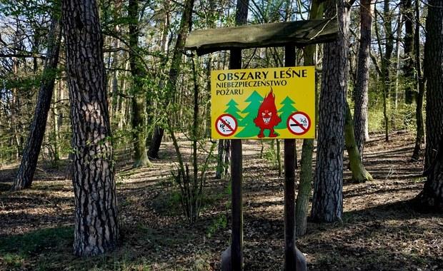 Susza daje się we znaki: W polskich lasach wzrosło zagrożenie pożarowe