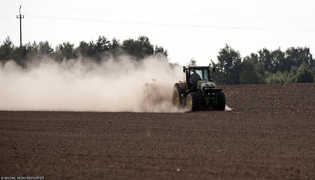 Susza w rolnictwie przybrała katastrofalne rozmiary. Fot. Michał Kosc AGENCJA WSCHÓD /Reporter