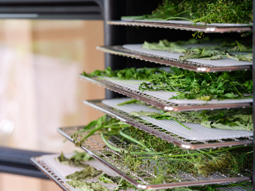 Suszenie ziół w piekarniku lub suszarce może potrwać od dwóch do czterech godzin /123RF/PICSEL