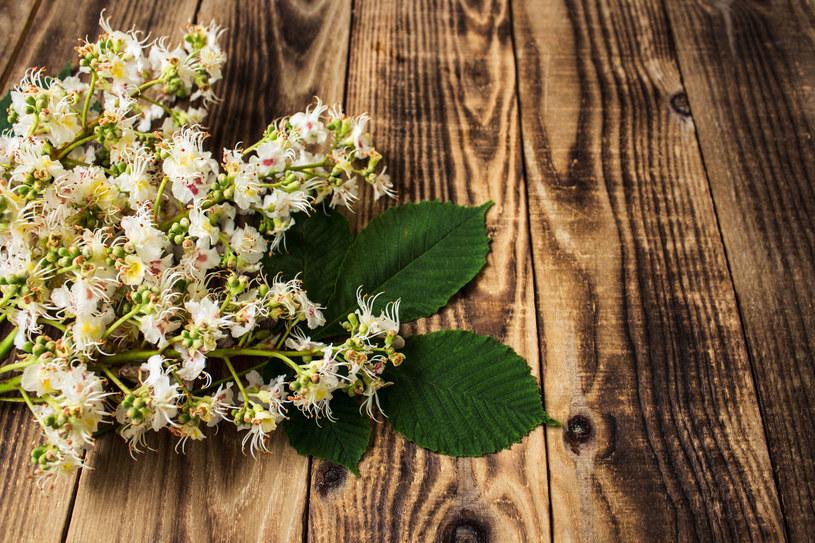 Suszone kwiaty kasztanowca kupisz w aptece i sklepie zielarskim /123RF/PICSEL
