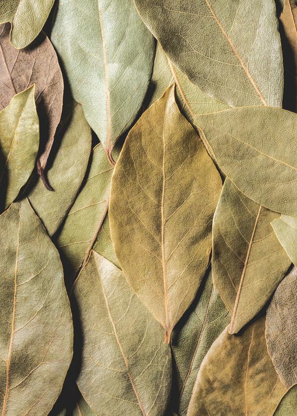 Suszone liście laurowe /©123RF/PICSEL
