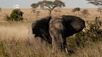 Świat dzikich zwierząt