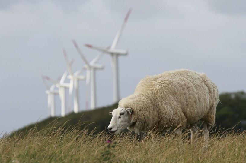 Świat powinien znacznie zwiększyć wykorzystanie energii odnawialnej /AFP