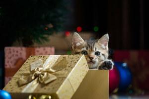 """Święta Bożego Narodzenia. """"Żywe prezenty"""" pod choinkę. Co dzieje się z niechcianymi zwierzętami?"""