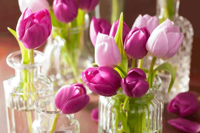 Świeże kwiaty to wspaniała ozdoba domu /123RF/PICSEL