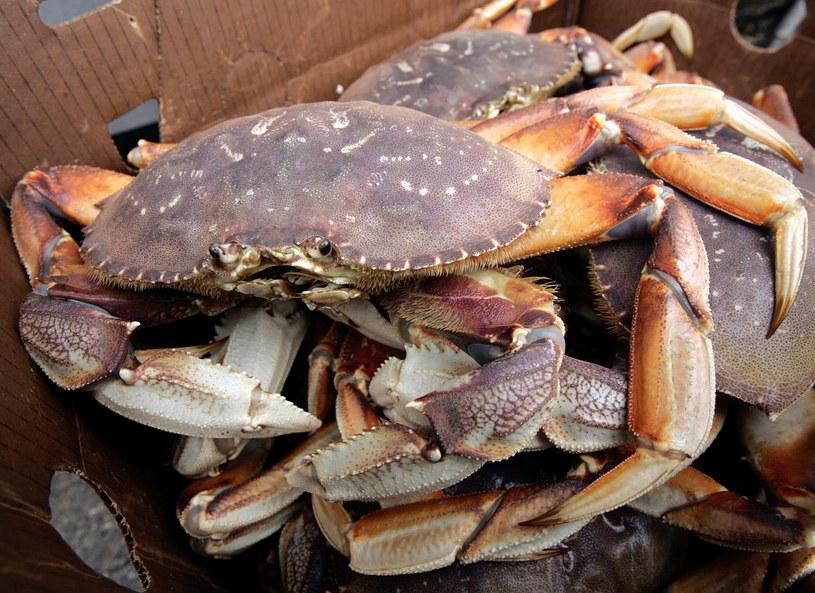 Świeży krab - warto zadać sobie więcej trudu, by go znaleźć /Getty Images/Flash Press Media