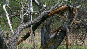 Synoptycy ostrzegają. Burze i porywisty wiatr