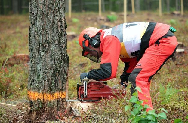 Sypią się kary za wycinkę drzew bez zezwolenia /©123RF/PICSEL