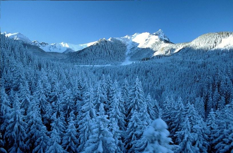 Sypnęło śniegiem w Tatrach /Dariusz Zarod /East News