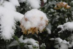 Sypnęło śniegiem. Zdjęcia słuchaczy RMF FM