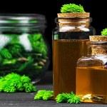 Syrop z pędów sosny: Eliminuje bakterie i wzmacnia odporność