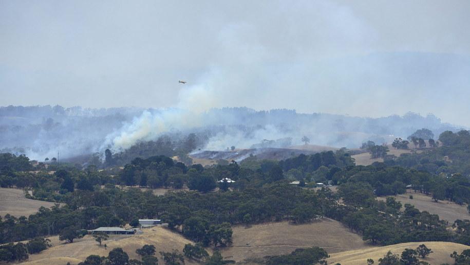 Sytuacja na wzgórzach Adelajdy wymyka się spod kontroli /David Mariuz /PAP/EPA