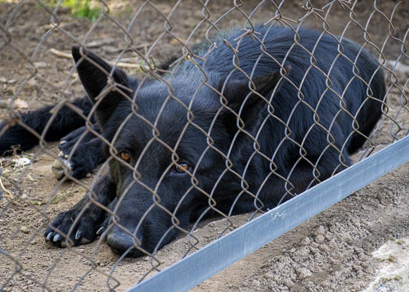 Sytuacja psów w wielu schroniskach jest dramatyczna /123RF/PICSEL