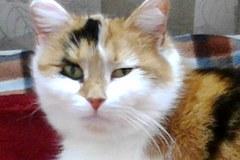Szare, bure i pstrokate. Wielka galeria Waszych kociaków! Część 3