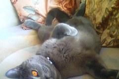 Szare, bure i pstrokate. Wielka galeria Waszych kociaków! Część 4