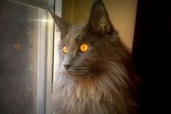 Szare, bure i pstrokate. Wielka galeria Waszych kociaków!