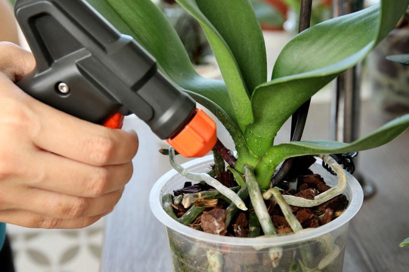 Szare mydło zwalcza szkodniki /©123RF/PICSEL
