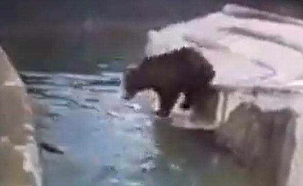 Szarpał się z niedźwiedziem w warszawskim zoo. 23-latek dobrowolnie poddał się karze