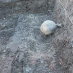 Szczątki czarownic znalezione w Bochni? Wiele na to wskazuje