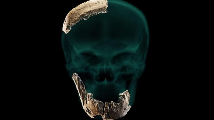 Szczątki nowo odkrytego gatunku człowieka /materiały prasowe