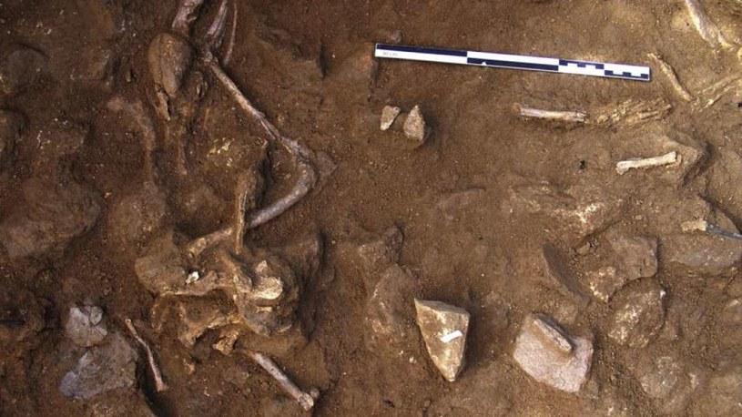 Szczątki psów pochowanych razem z ludźmi w okolicach Barcelony /materiały prasowe
