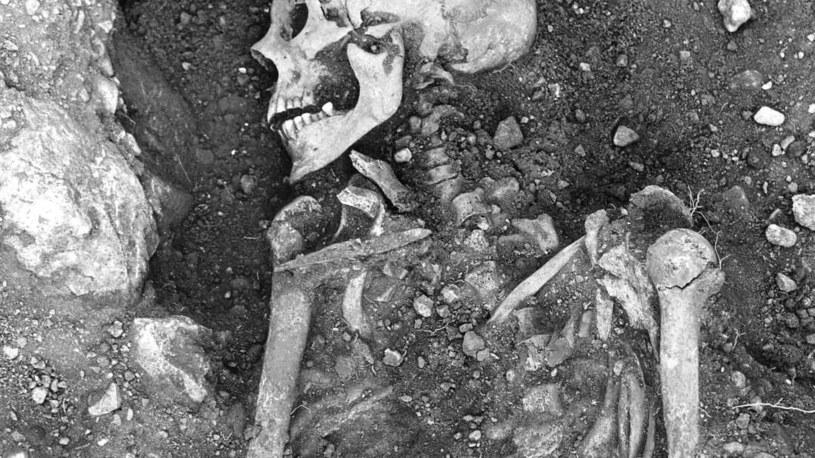 Szczątki wikingów, u których znaleziono wirusa ospy prawdziwej /materiały prasowe