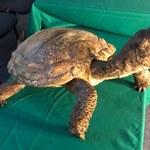 Szczątki żółwia sprzed 215 milionów lat. Wielkie odkrycie polskich naukowców