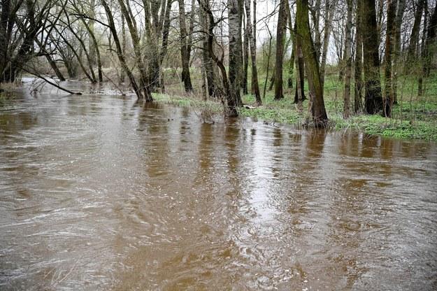 Szczególnie trudna sytuacja hydrologiczna panuje w województwie podkarpackim. Na zdjęciu rzeka Trzebośnica w Nowej Sarzynie /Darek Delmanowicz /PAP