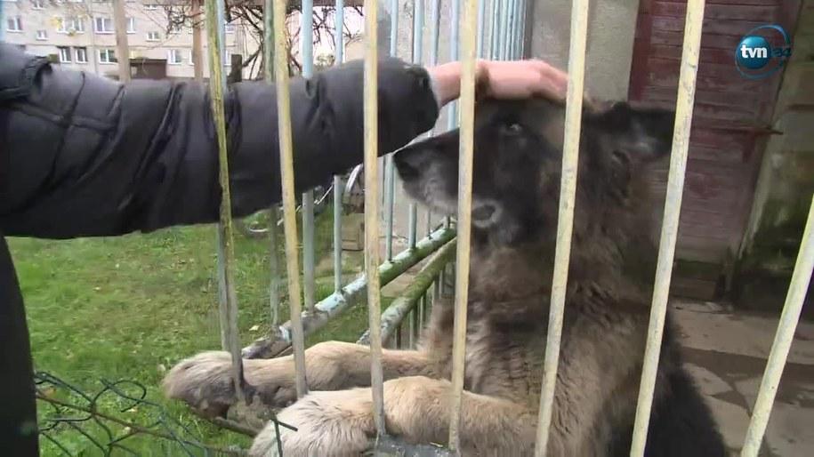 Szczekanie tego psa przeszkadza sąsiadowi /TVN24/x-news