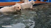 Szczeniaczki cieszą się swoją pierwszą kąpielą