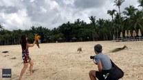 Szczeniak bawi się z papugą na plaży