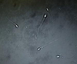 Szczepienia przeciw COVID-19 wpływają na płodność mężczyzn