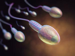 Szczepienie przeciw COVID-19 wpływa na płodność mężczyzn. Poprawia się jakość nasienia